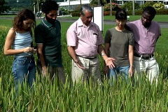 Trainees-at-IRRI